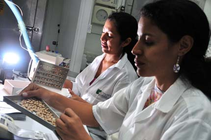 Lab work: Preparing seeds for storage