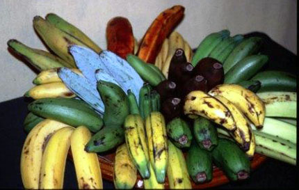 Blue, red, green bananas