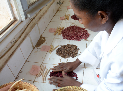 Biofortified beans for school lunch in Madagascar