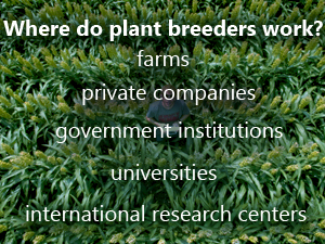 hybrid the history and science of plant breeding