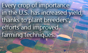 Every crop of importance in the U.S. has increased yield, thanks to plant breeders' efforts and improved farming techniques