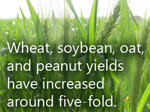 Wheat, soybean, oat, and peanut yields have increased around five-fold.