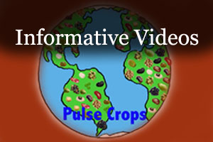 Link to informative videos about pulses