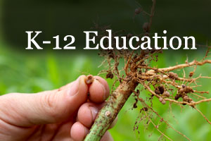 Legume nodule and roots and link to k-12 education materials