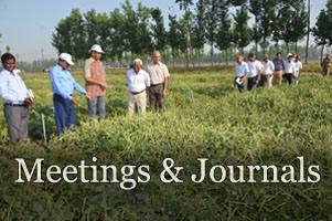 B.B. Singh and other researchers in cowpea field