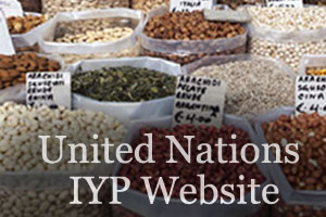 UN photo of dried pulse seeds at market and link to UN web site