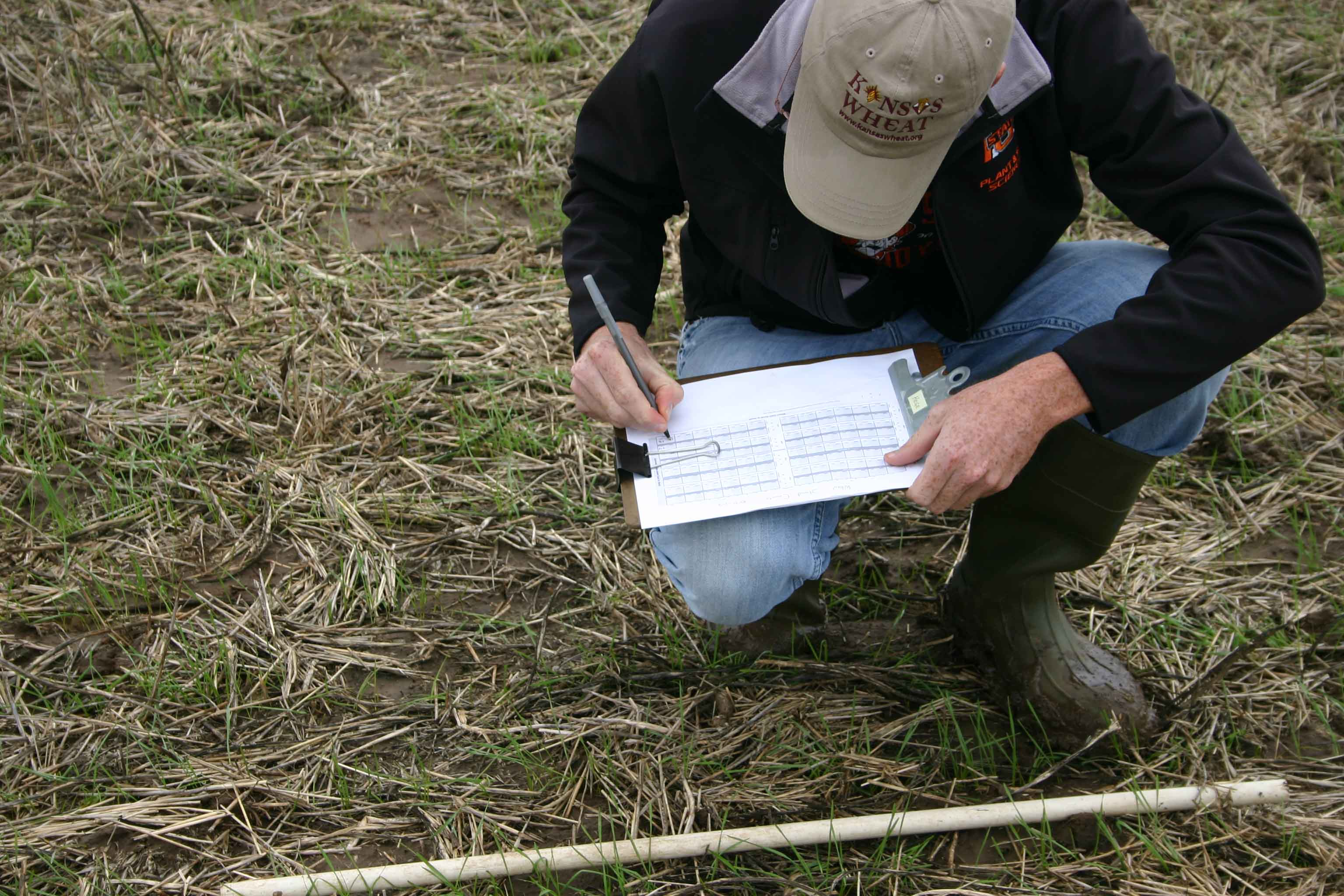 Crop Science student evaluating wheat