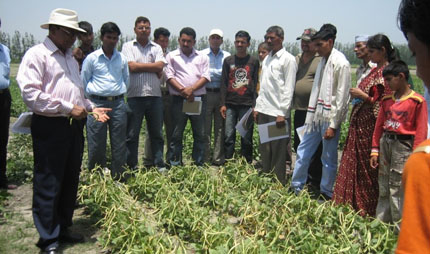 Singh in cowpea field in India with researchers and growers