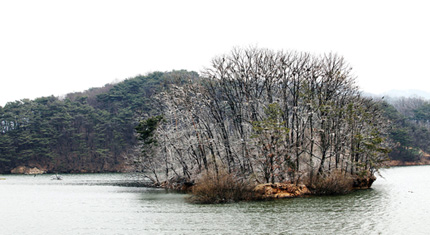Small islet in Maji Reservoir is home to many cormorants