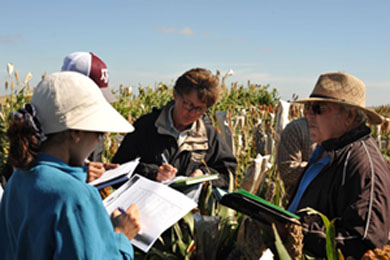 Mentoring young scientists on sorghum germplasm