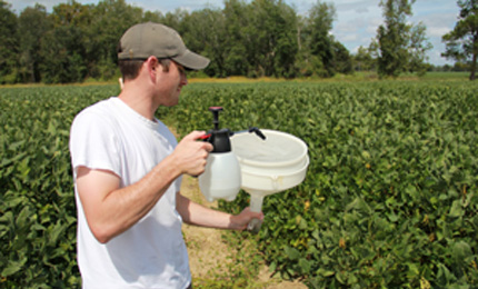 Bray collects soy kudzu bugs