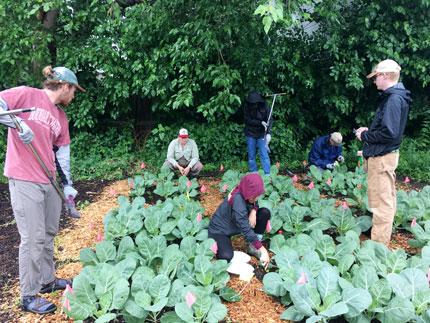 Varios jardineros en un jardín comunitario en Minnesota: recortar, escardar
