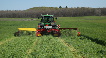 Harvesting triticale in spring