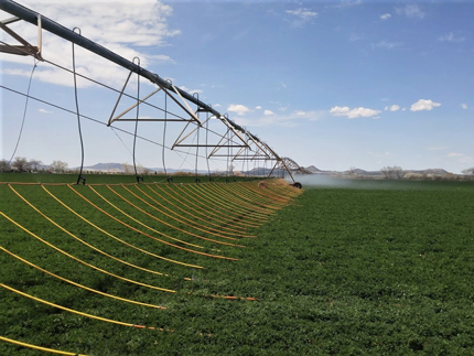 Pivot irrigation in field with drip irrigation.
